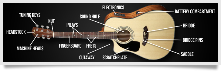 The Anatomy of an Acoustic Guitar