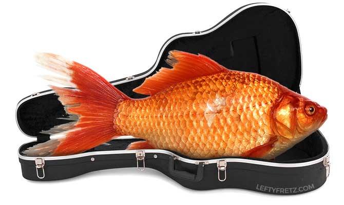 How To Acclimatize A Guitar